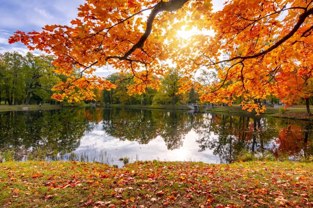 Autumn in the park view to a small lake with branches from a tree with leaves in orange, yellow and red