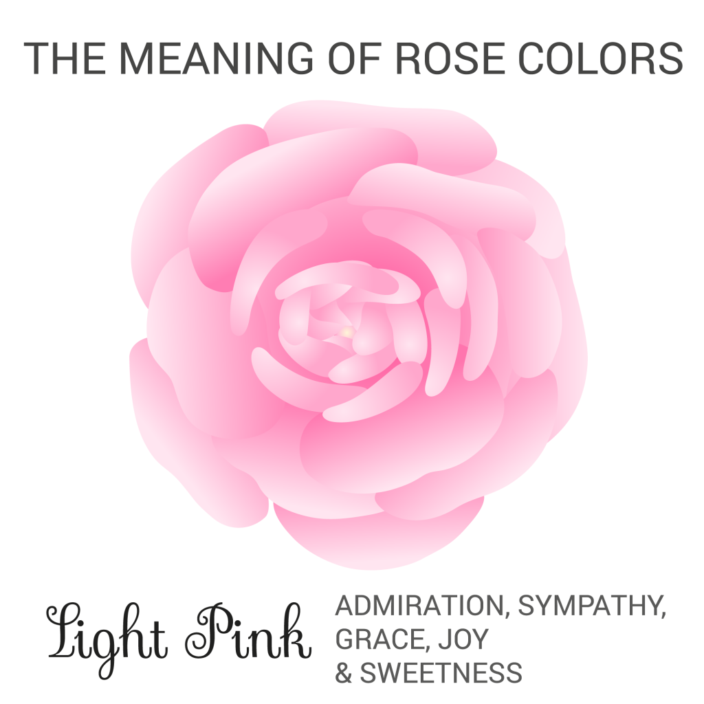 light pink rose color meaning infographic