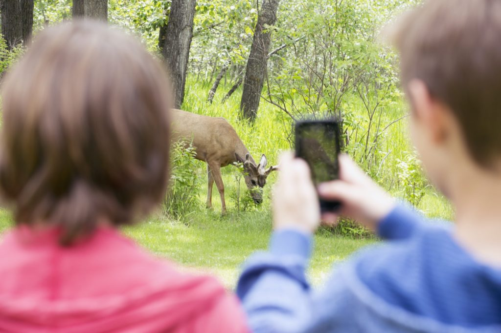 Two middle school students taking a picture of a deer in the forest