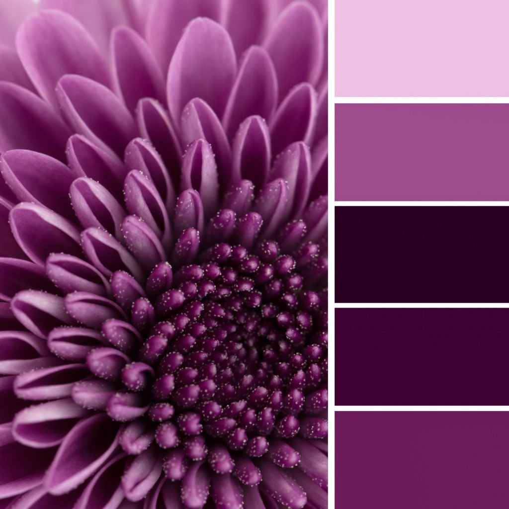 Monochromatic color scheme with close up of flower in shades of purple