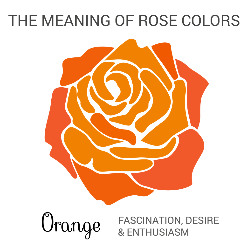 orange rose color meaning infographic