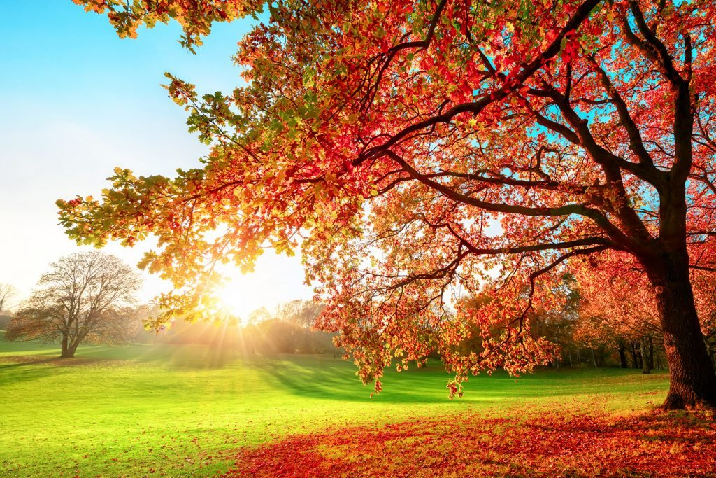 Sunny park in tetradic autumn colors with blue sky, green grass and red and orange leaves on tree