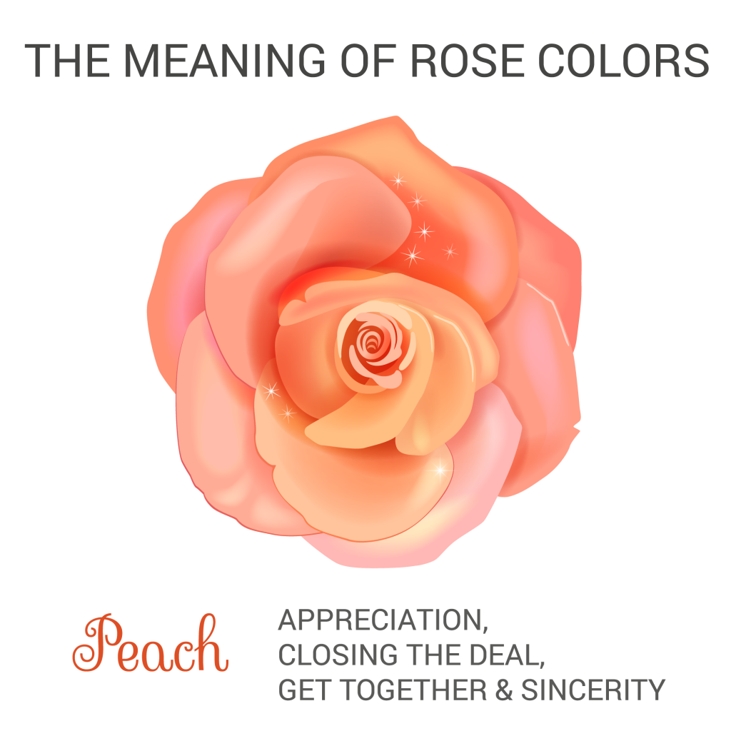 peach rose color meaning infographic