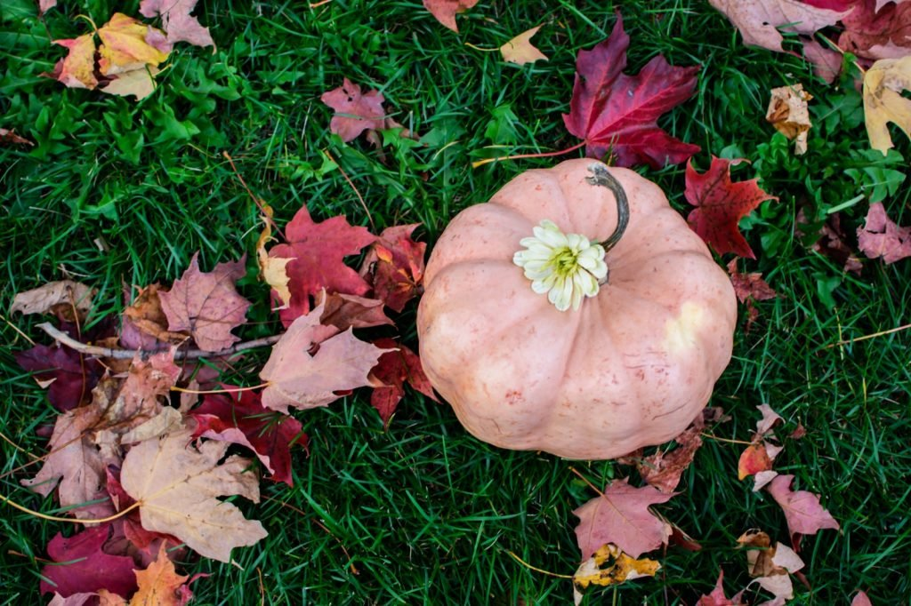 Pink pumpkin on grass with leaves around