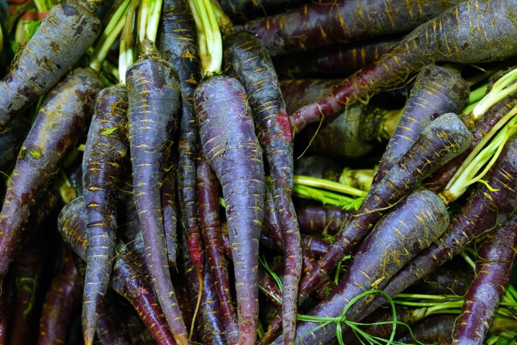 Close up of a pile of fresh purple carrots with bright green top