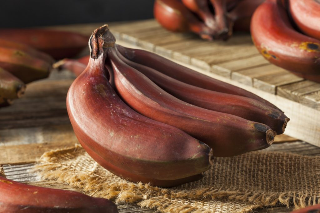 Bunch of organic red bananas on table