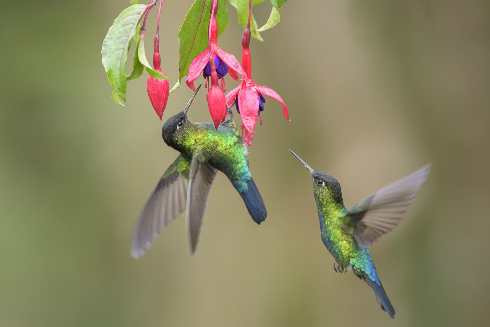 What Colors Attract Hummingbirds And How Many Colors Can They See