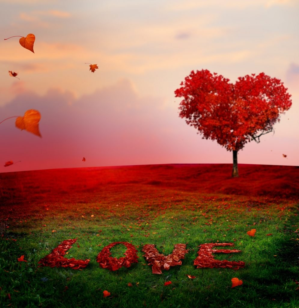 Red heart shaped tree with leaves on green grass spelling the word love