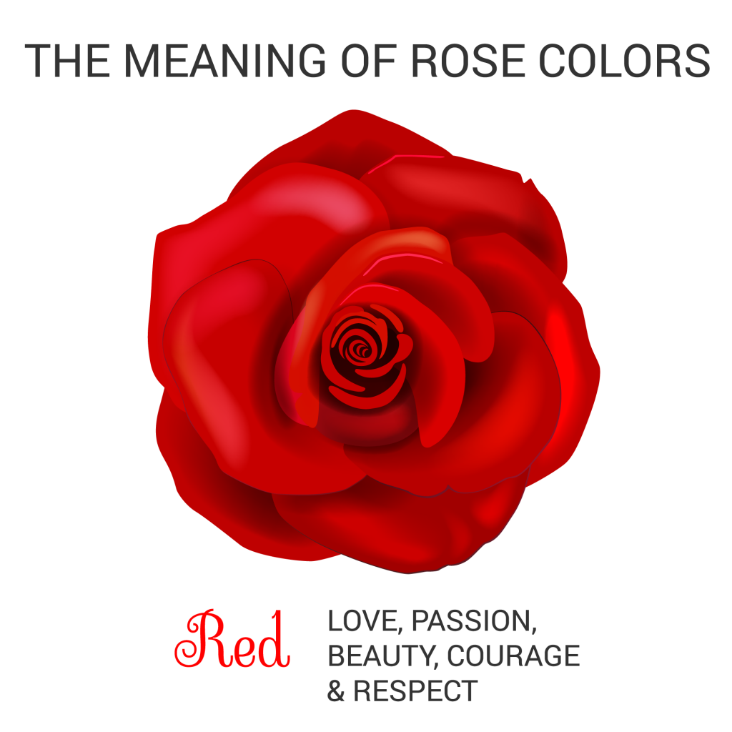 red rose color meaning infographic