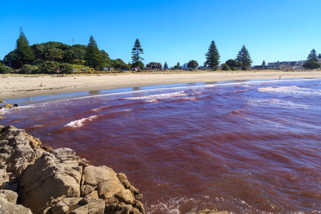 Red tide washing ashore at Mount Maunganui in New Zealand