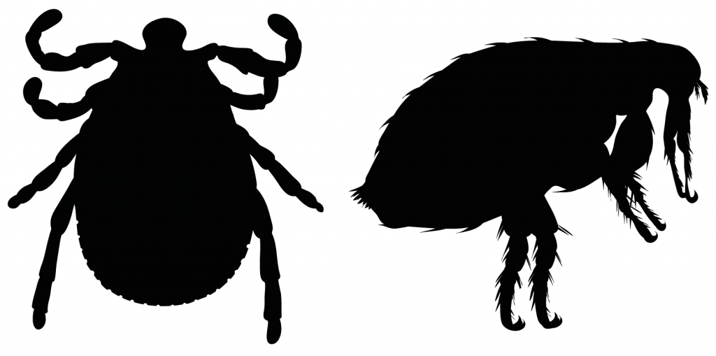 Silhouette of a flea and a tick