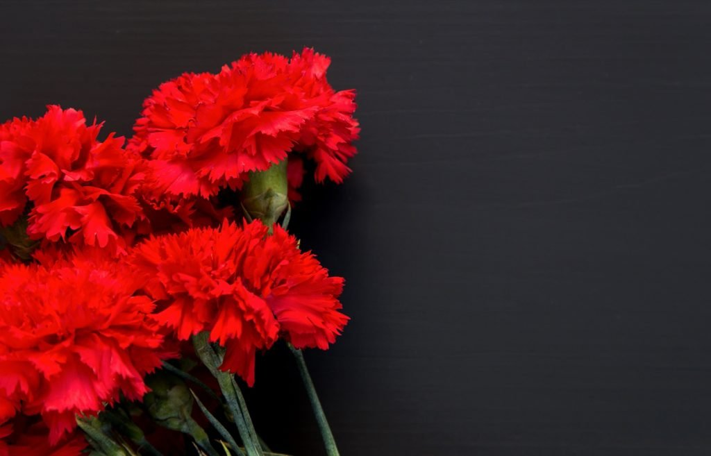 Studio photo of several red carnations on a black background