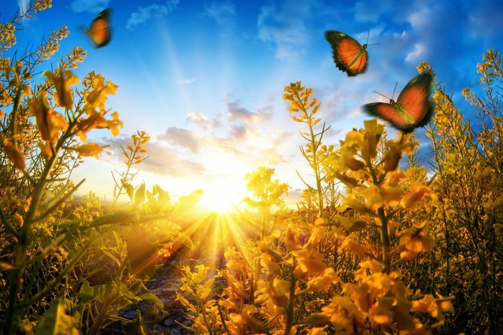 Sunset seen through blossoms on a meadow with butterflies roaming in the air and deep blue sky