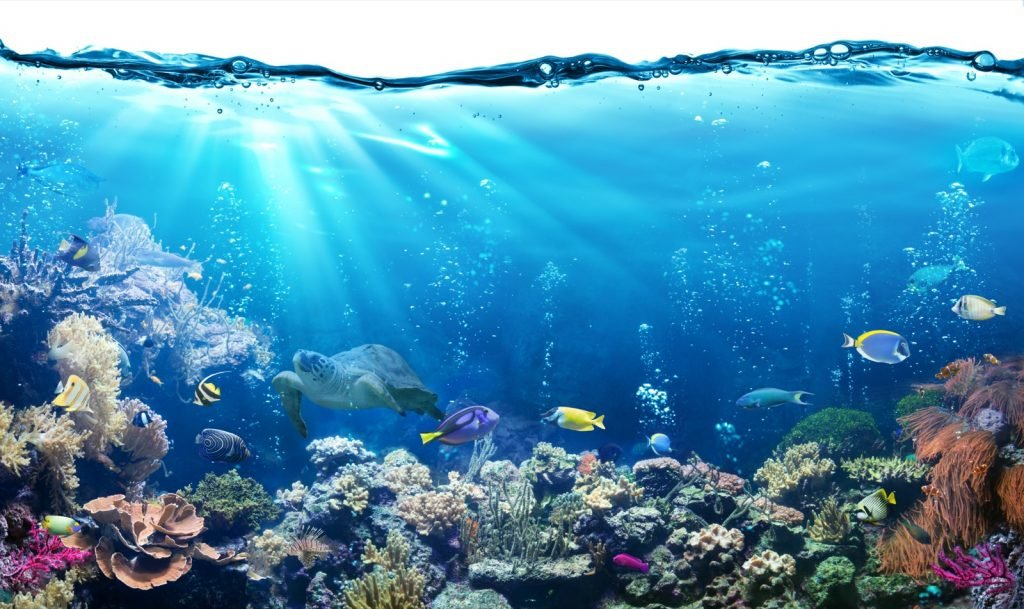 Colorful underwater scene with reef and tropical fish