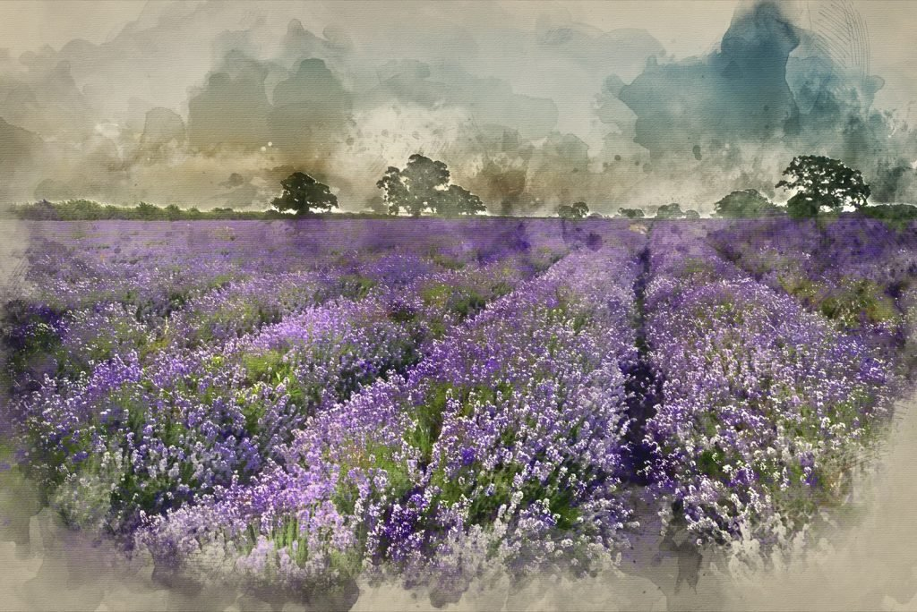 Watercolor painting of colorful lavender field in the countryside using recessive colors to create depth