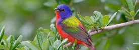 what colors are birds attracted to