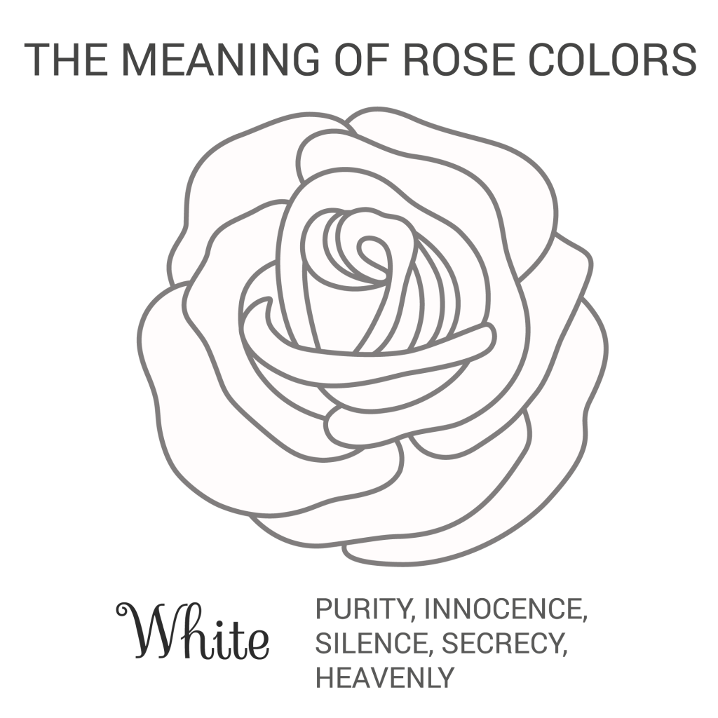 white rose color meaning infographic