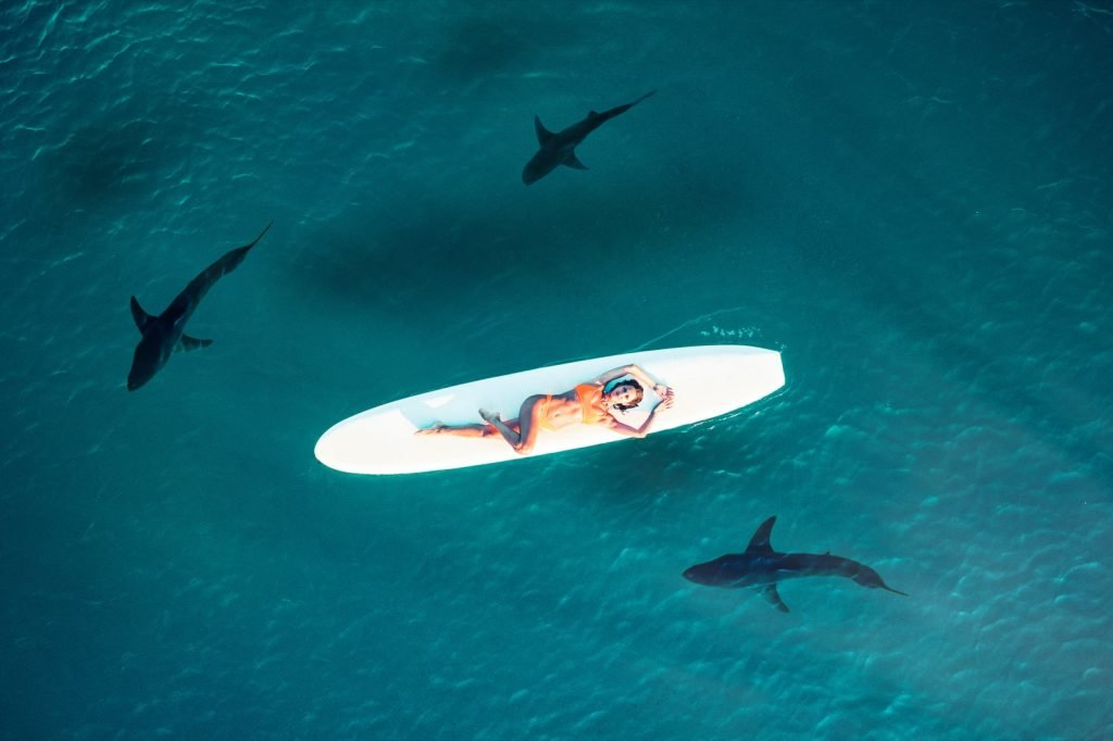 Woman in bright colored bathing suit on white surfboard is attracting sharks in the ocean