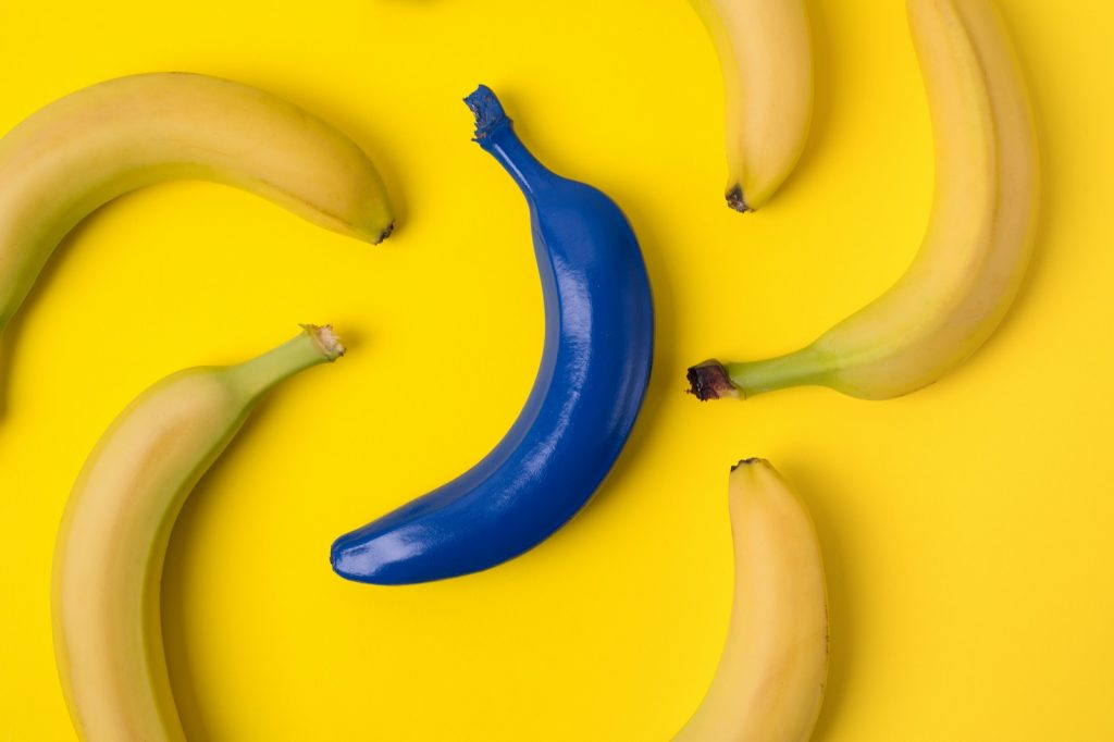 Contrasting colors of yellow bananas and one blue banana on a yellow background