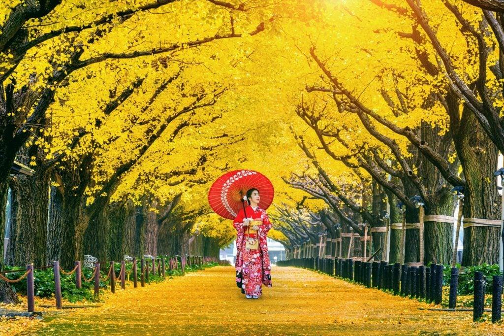 Woman wearing Japanese kimono near yellow ginkgo trees symbolizing bravery and prosperity