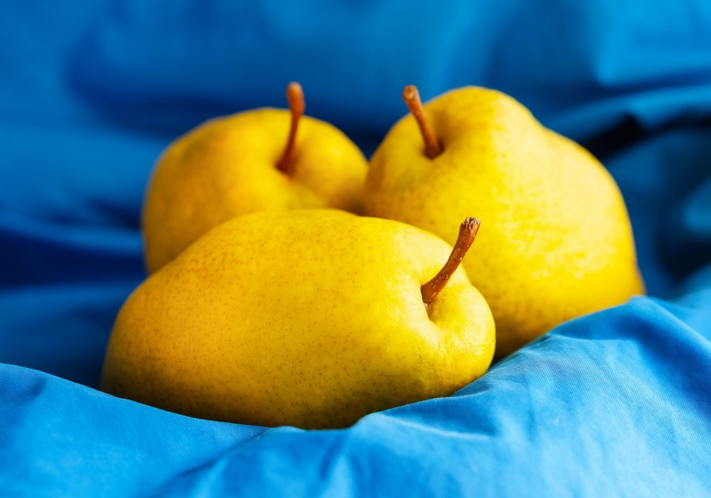 Closeup of three ripe yellow pears on a blue background