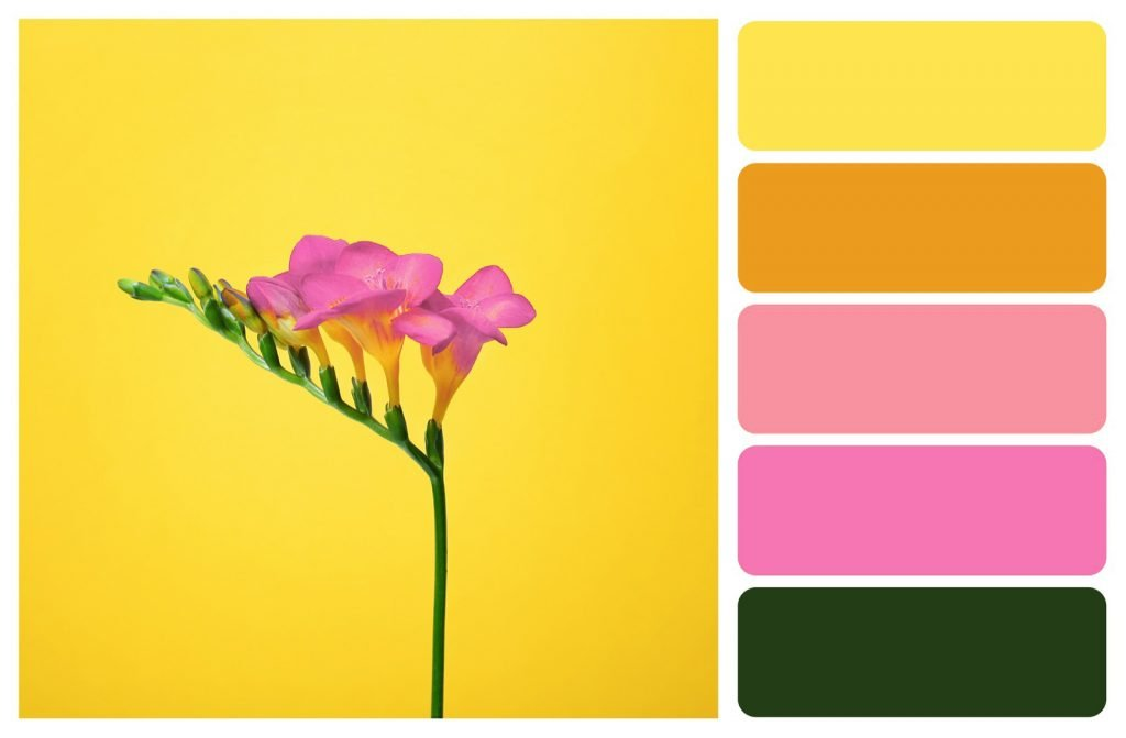Yellow and pink color palette